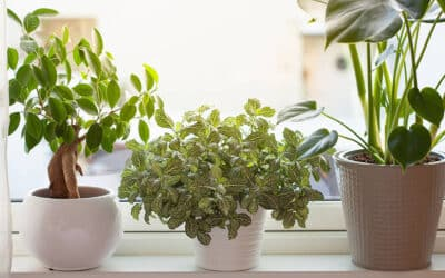 Improve Your Apartment's Air by Following These Simple Tips